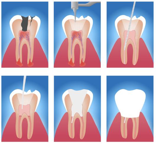 chest nut hill dental